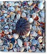 Circluar Shell In Watercolor Canvas Print