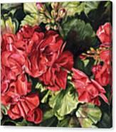 City Flowers Red Geranium Canvas Print