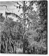 City Park Lagoon - Bw Canvas Print