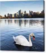 City Swan Canvas Print