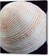Clam Shell Canvas Print