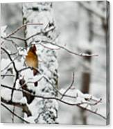 Classic Cardinal In Snow Canvas Print