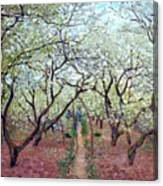 Claude Monet Orchard In Bloom Canvas Print