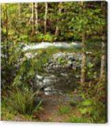 Clear Mountain Stream Canvas Print