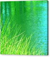 Clear Sighted Canvas Print