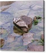 Clear Waters Canvas Print