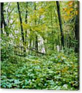 Clearing Glimpsed 6 Canvas Print