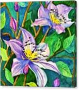 Clematis For Elsie Canvas Print