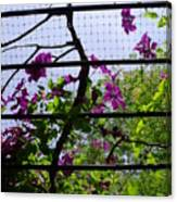 Clematis I Canvas Print