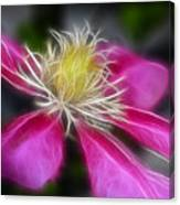 Clematis In Pink Canvas Print