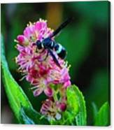Clethra And Wasp Canvas Print