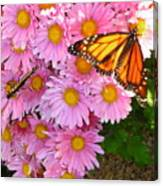 Cliff House Butterflies Canvas Print
