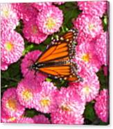 Cliff House Butterflies Ll Canvas Print