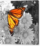 Cliff House Butterfly Canvas Print