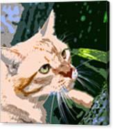 Climbing Cat Canvas Print