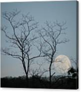 Climbing Moon Canvas Print