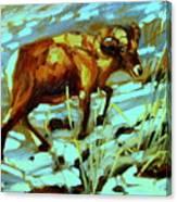 Climbing Ram Canvas Print