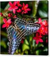 Clipper Butterfly 1 Canvas Print