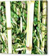 Close Up Big Fresh Bamboo Canvas Print