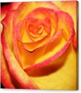 Close-up Canvas Print