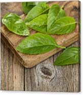 Close Up Fresh Basil Leafs On Rustic Serving Board  Canvas Print