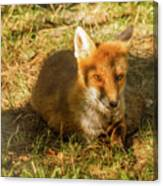 Close-up Of A Fox Resting In A Park Canvas Print