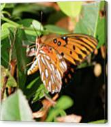 Close-up Of A Vibrant Gulf Fritilary Butterfly  Canvas Print