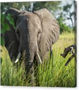 Close-up Of Elephant Behind Bush Facing Camera Canvas Print