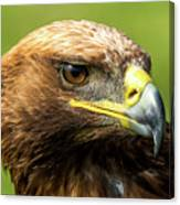 Close-up Of Golden Eagle With Turned Head Canvas Print