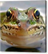 Close-up Of Leopard Frog Canvas Print