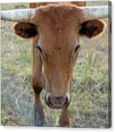 Close Up Of Longhorn Head Through Fence Canvas Print