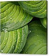 Close-up Of Raindrop On Green Leaves Canvas Print