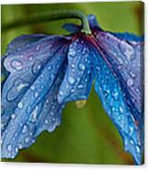 Close-up Of Raindrops On Blue Flowers Canvas Print