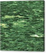 Close-up Of Scum Pong Canvas Print