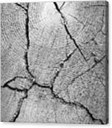 Close Up Of Tree Trunk Canvas Print