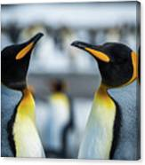 Close-up Of Two King Penguins In Colony Canvas Print