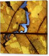 Close Up Of Yellow Leaf Canvas Print
