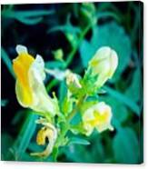Close Up Of Yellow Wild Flowers Canvas Print