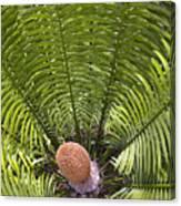 Close-up Palm Leaves Canvas Print