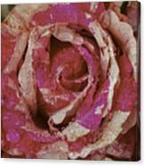 Close Up Pink Red Rose Canvas Print