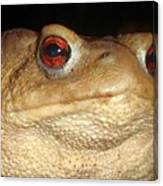 Close Up Portrait Of A Common Toad Canvas Print