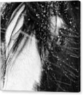 Close Up Portrait Of A Horse In Falling Snow Canvas Print