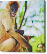 Close-up Portrait Of A Nicaraguan Spider Monkey Sitting And Looking At The Camera Canvas Print