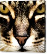Close Up Shot Of A Cat Canvas Print