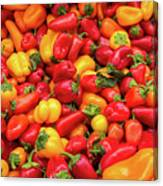 Close Up View Of Small Bell Peppers Of Various Colors Canvas Print