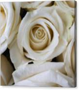 Close Up White Roses Canvas Print