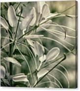 Close Up Wild Flower Canvas Print