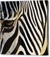 Close Up Zebra Canvas Print