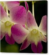 Close View Of A Pink Orchid Flowers Canvas Print