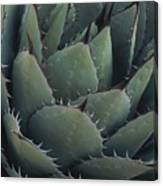 Close View Of An Agave Plant Canvas Print